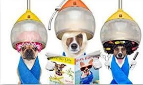 Toilettage et soins pour animaux